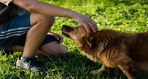 Urlaub mit Hund in Sachsen Anhalt