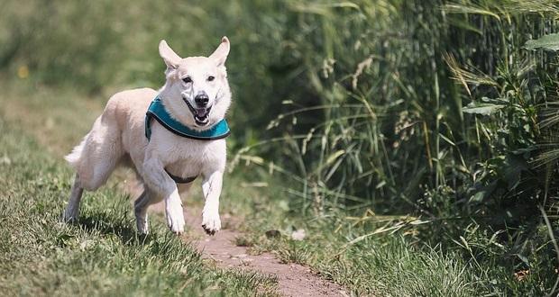 Urlaub mit Hund in Schleswig-Holstein