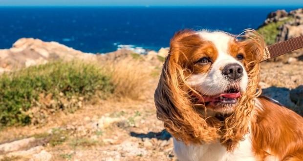Urlaub mit Hund in Kroatien