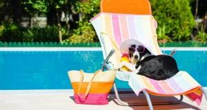 Urlaub mit Hund in Griechenland