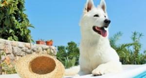 Urlaub mit Hund in Kanada